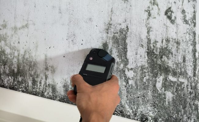 Image mold-inspection_2